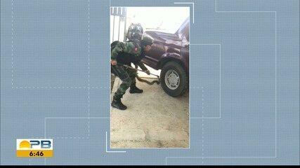 Jiboia de 1,5 metro é encontrada enroscada em carro estacionado em Patos, PB