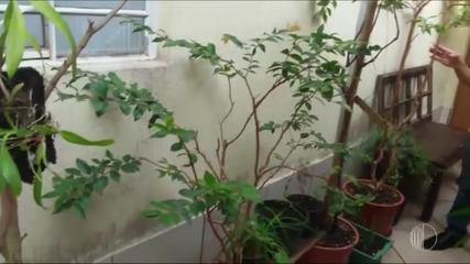'Momento Mais Diário': Carlos fala da importância de ter plantas em casa