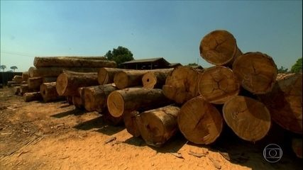 Grandes empresas do agronegócio assinam manifesto de combate ao desmatamento na Amazônia