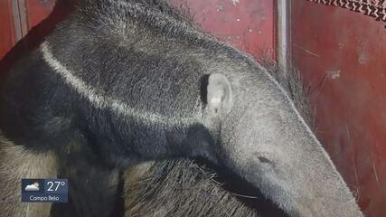 Sul de MG tem aumento em número de animais resgatados com ferimentos de incêndios