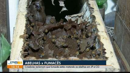 Criadores de abelhas da PB alertam para o uso de fumacê, que ameaça espécie