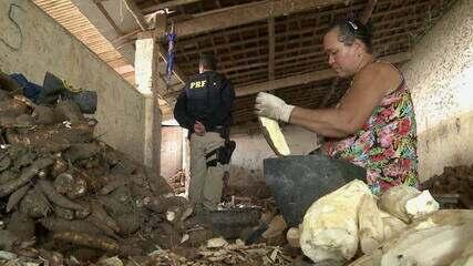 Trabalho escravo no Brasil: 2.600 inquéritos foram abertos entre 2010 e 2019