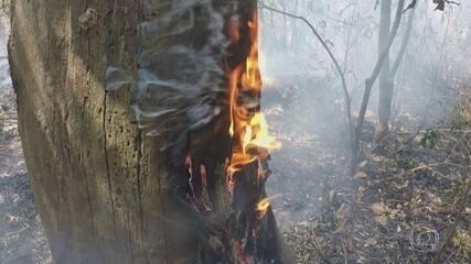 Incêndios no Pantanal levam governo de Mato Grosso do Sul a decretar emergência ambiental