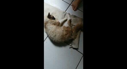 Tutora de gatos gravou bichanos agonizando após se alimentar de prato deixado no telhado