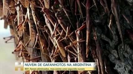 Argentina consegue eliminar 80% da nuvem de gafanhotos