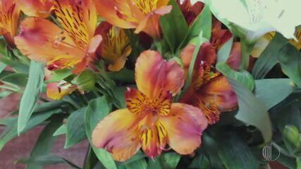 'Momento Mais Diário': saiba quais flores alegram o ambiente