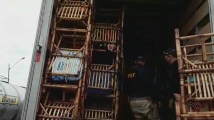 Polícia apreende cigarros escondidos em carga de cadeiras de bambu em Ourinhos