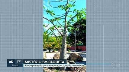 Polícia investiga quem cortou árvore na Ilha de Paquetá