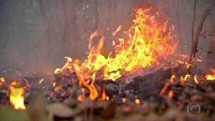 Focos de incêndio no Pantanal triplicam em julho em relação ao mesmo mês de 2019
