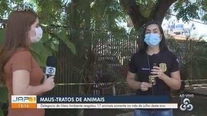 Delegacia de Meio Ambiente resgatou quase 20 animais vítimas de maus-tratos em Macapá