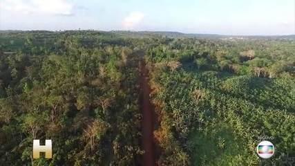 Dados do Inpe mostram que áreas com alerta de desmatamento cresceram 34,5% em um ano