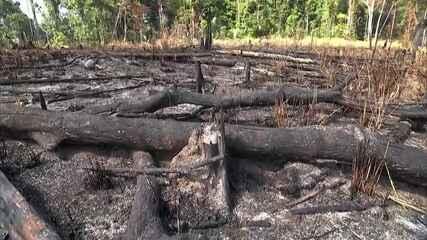 Alertas de desmatamento na Amazônia sobem 34% em um ano