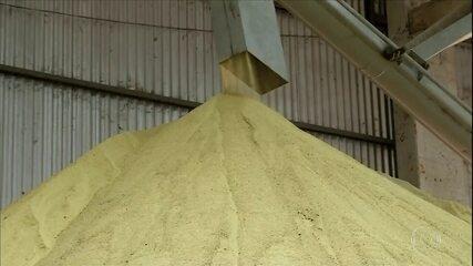 Produção de milho movimenta economia de cidade do Mato Grosso