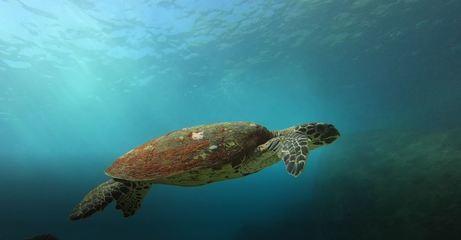 O maravilhoso fundo do mar sob os olhos de um instrutor de mergulho
