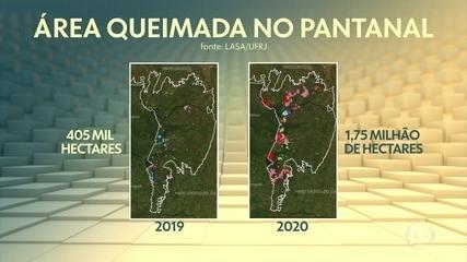 Queimadas e a falta de chuvas estão mudando características do Pantanal