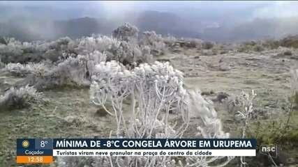 Miníma de -8ºC congela árvores em Urupema