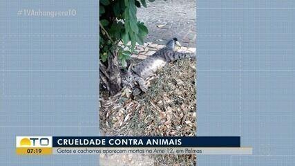 Gatos e cachorros aparecem mortos na Arne 12 em Palmas