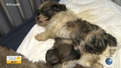 Filhotes de cães são encontrados dentro de caixas de papelão, amontoados em veículo