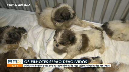 MP pede que filhotes encontrados em carro e entregues em pet shops sejam devolvidos