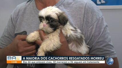 Mais da metade dos cachorrinhos resgatados pela PRF em Itaberaba não resistiu e morreu