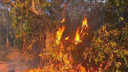 Especialistas consideram as queimadas atuais a maior tragédia ambiental do Pantanal