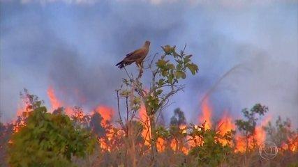 Mato Grosso decreta estado de calamidade por causa das queimadas