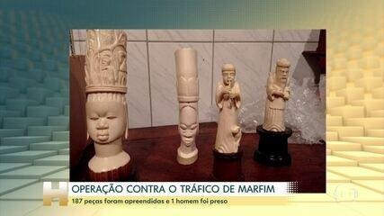 Operação combate o tráfico de marfim em São Paulo