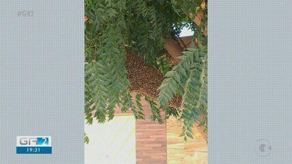 Especialistas explicam surgimento de abelhas na área urbana de Petrolina
