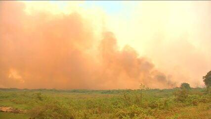 Pantanal do Mato Grosso teve 500 mil hectares devastados na última semana