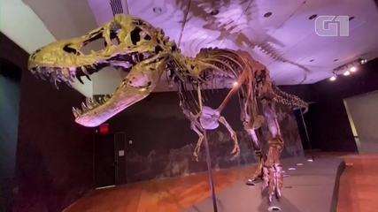 Esqueleto de Tiranossauro Rex vai a leilão em Nova York