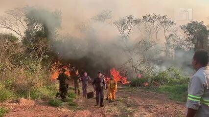 Incêndio atinge área de preservação da Estação Ecológica de Bauru