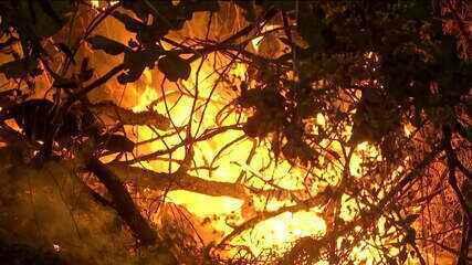 Governo reconhece estado de emergência em MT e libera recursos para combate ás queimadas