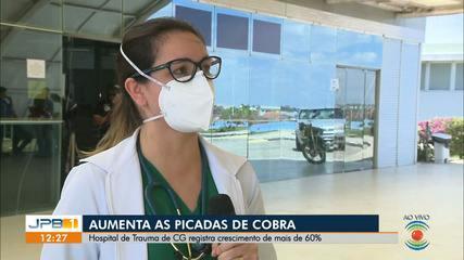 Atendimento de casos de picadas de cobra aumentam em Campina Grande