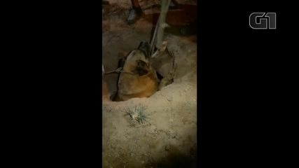 Cachorro é resgatado após ficar preso por três horas em tubulação