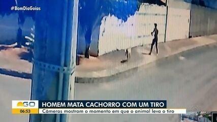 Homem mata cachorro a tiro em rua de Anápolis; vídeo