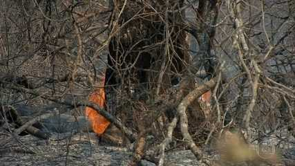 Dados do Ibama mostram o avanço do fogo em MT