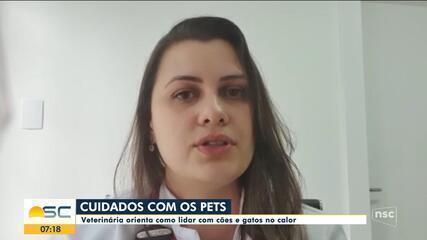Veterinária dá dicas de cuidados com cães e gatos no calor