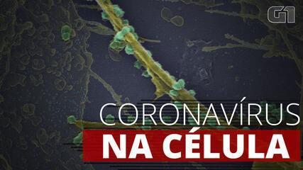Veja o coronavírus ampliado 200 mil vezes