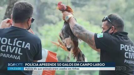 Polícia apreende 50 galos em Campo Largo