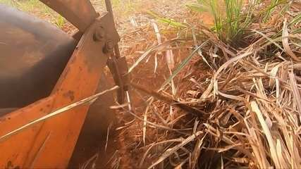 Agricultores relatam bons resultados com o uso da proteína hidrolisada