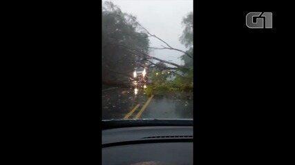 Árvores caem na BR-153 por causa da chuva