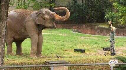 Zoológico e parques municipais de Sorocaba reabrem nesta quinta-feira
