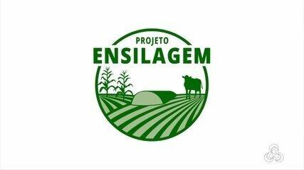 Série: Projeto Ensilagem em Rondônia