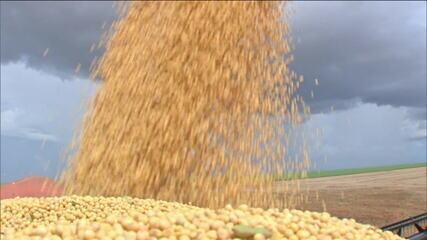 Câmara de Comércio Exterior zera tarifas de importação da soja e do milho