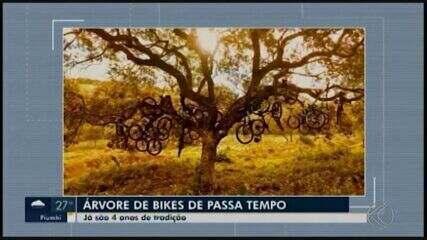 Árvore de Natal com bicicletas chama atenção em Passa Tempo
