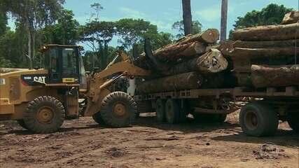 Documentos mostram que Ibama facilitou exportação de madeira extraída  ilegalmente | Natureza | G1