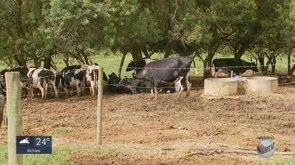 Número de registros de furto de gado aumenta em 18% de janeiro a outubro