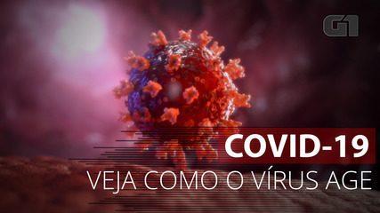 VÍDEO: Entenda como o coronavírus age no corpo humano