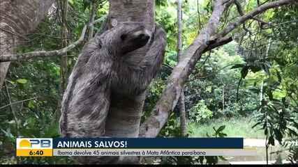 Ibama devolve 45 animais silvestres à Mata Atlântica da Paraíba