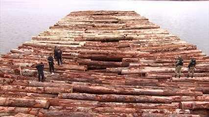 PF faz a maior apreensão de madeira irregular do país